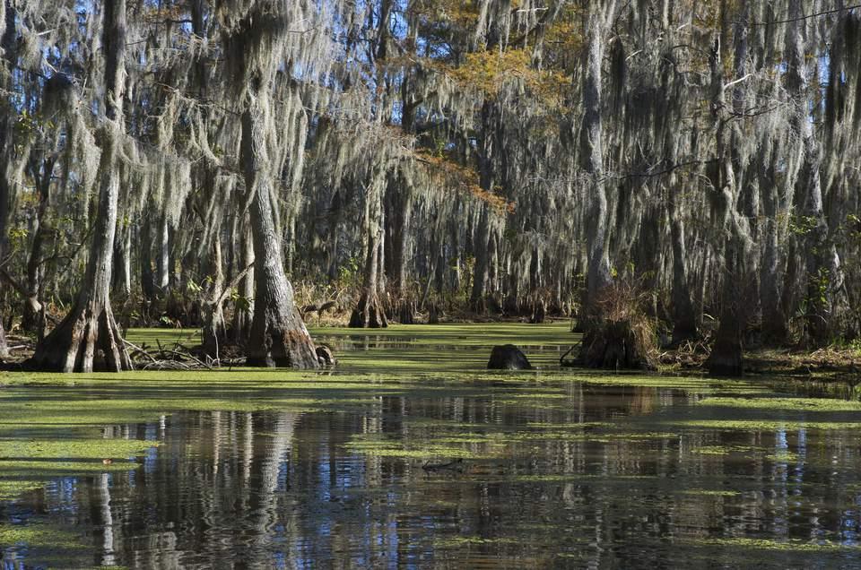 A swamp in Louisiana.