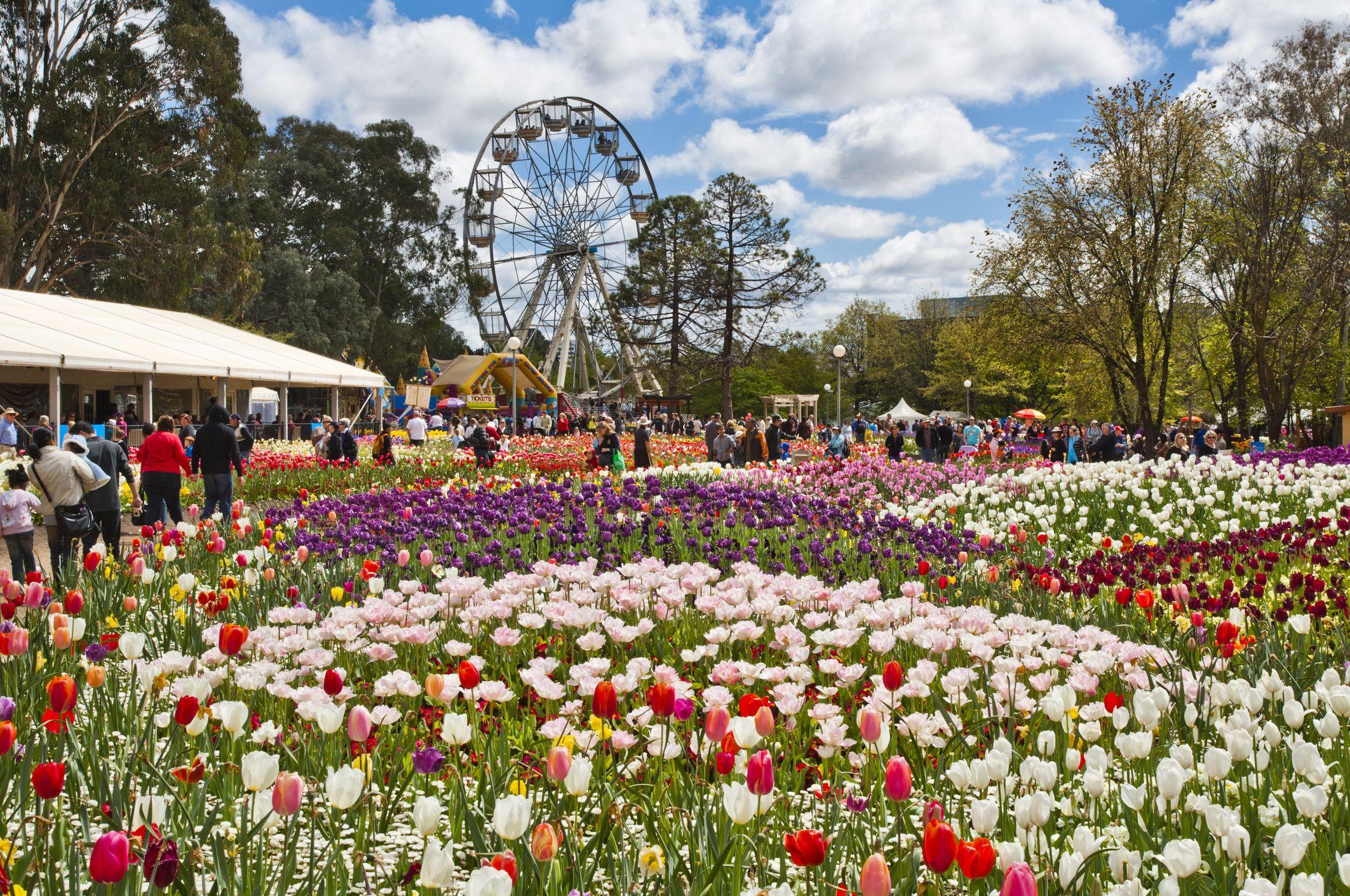 Floriade Vs Toowoomba Carnival Of Flowers
