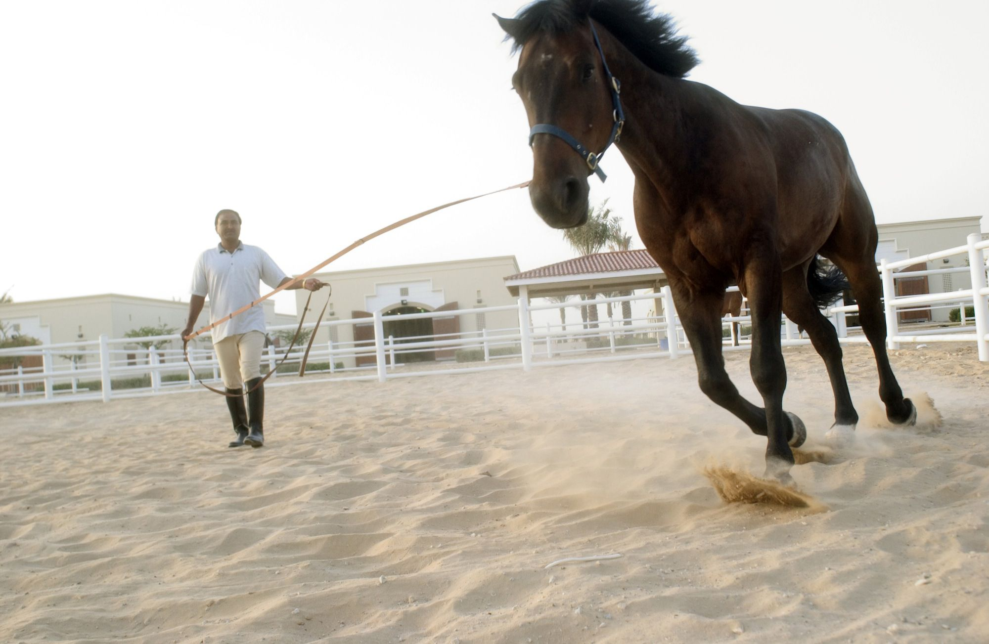 Learn About Being a Horse Trainer |Horse Training