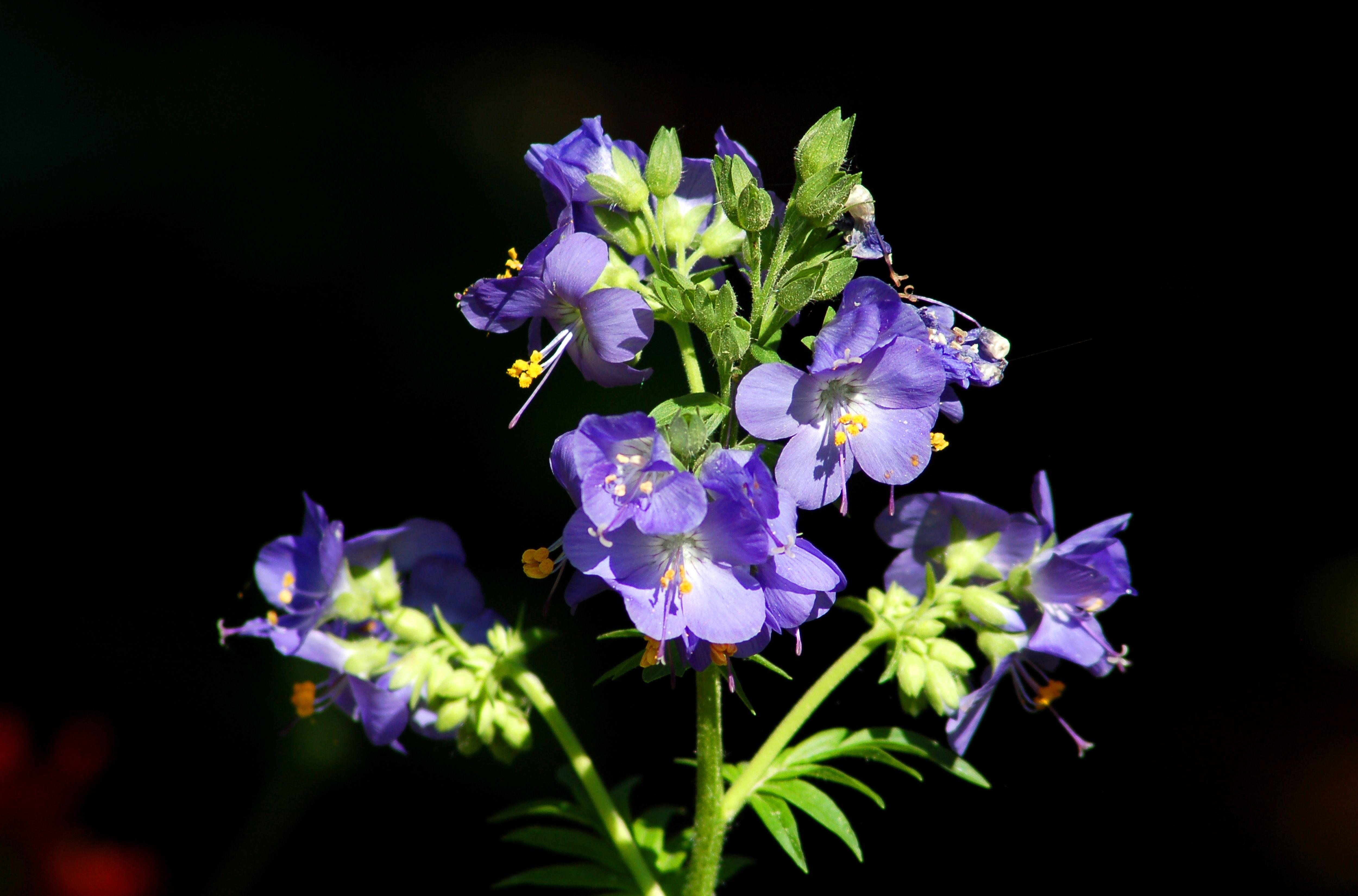 Педилантус уход в домашних условиях - Комнатные цветы и