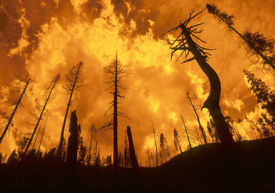 Wildfire in an Idaho Forest