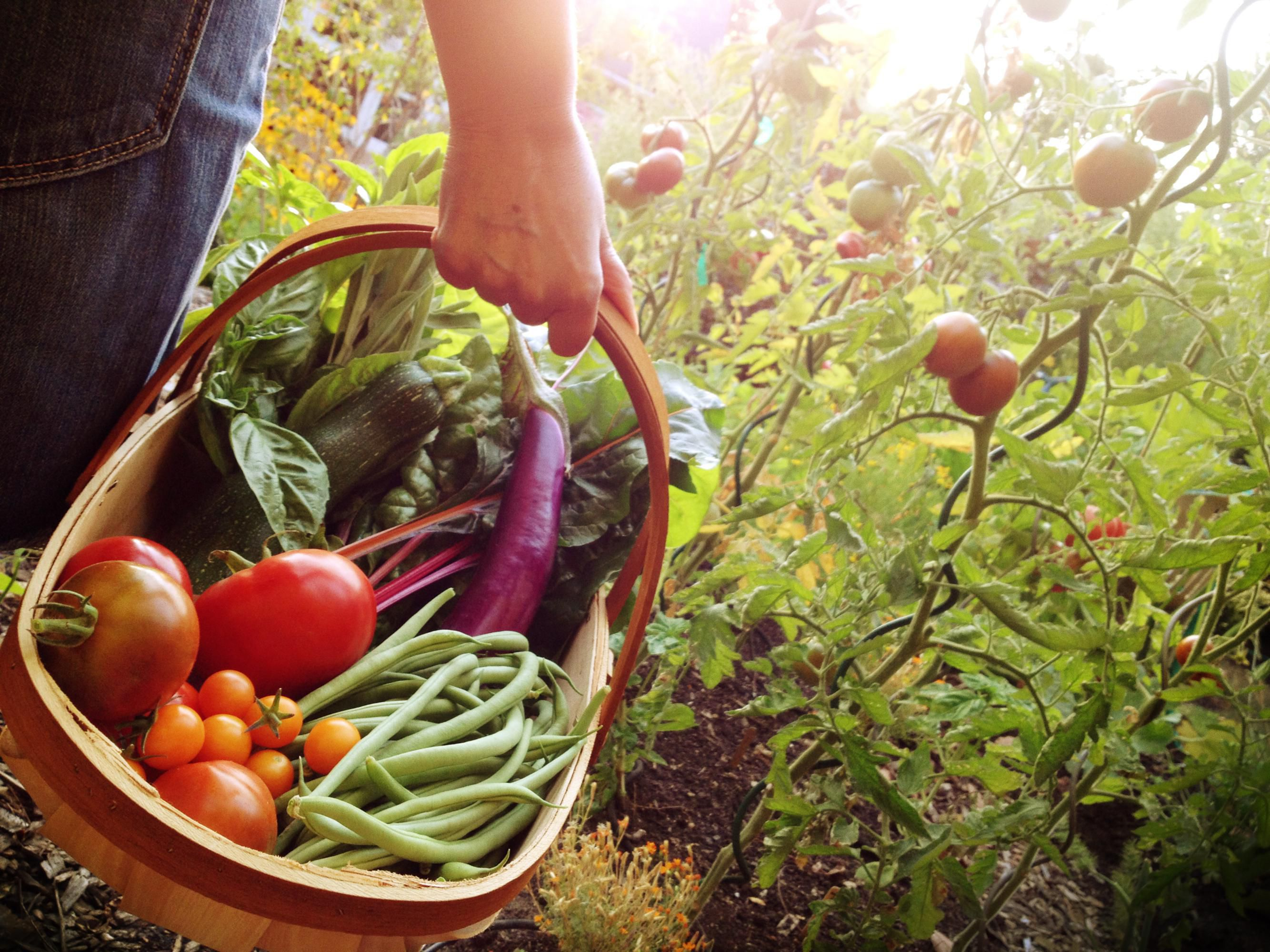 Deciding What Vegetables To Grow