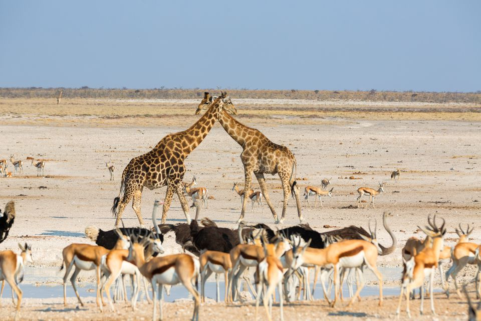 Eight of the Best Tourist Attractions in Namibia
