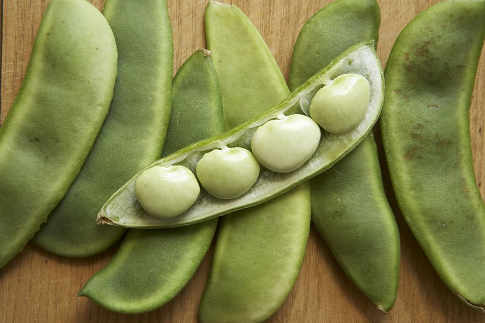 Easy How To For Growing Lima Beans