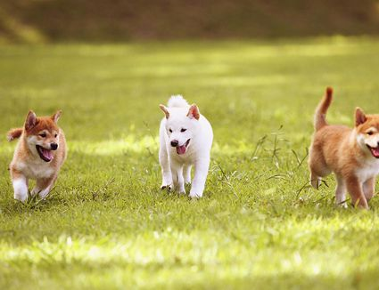 Training Your Dog To Play Softly