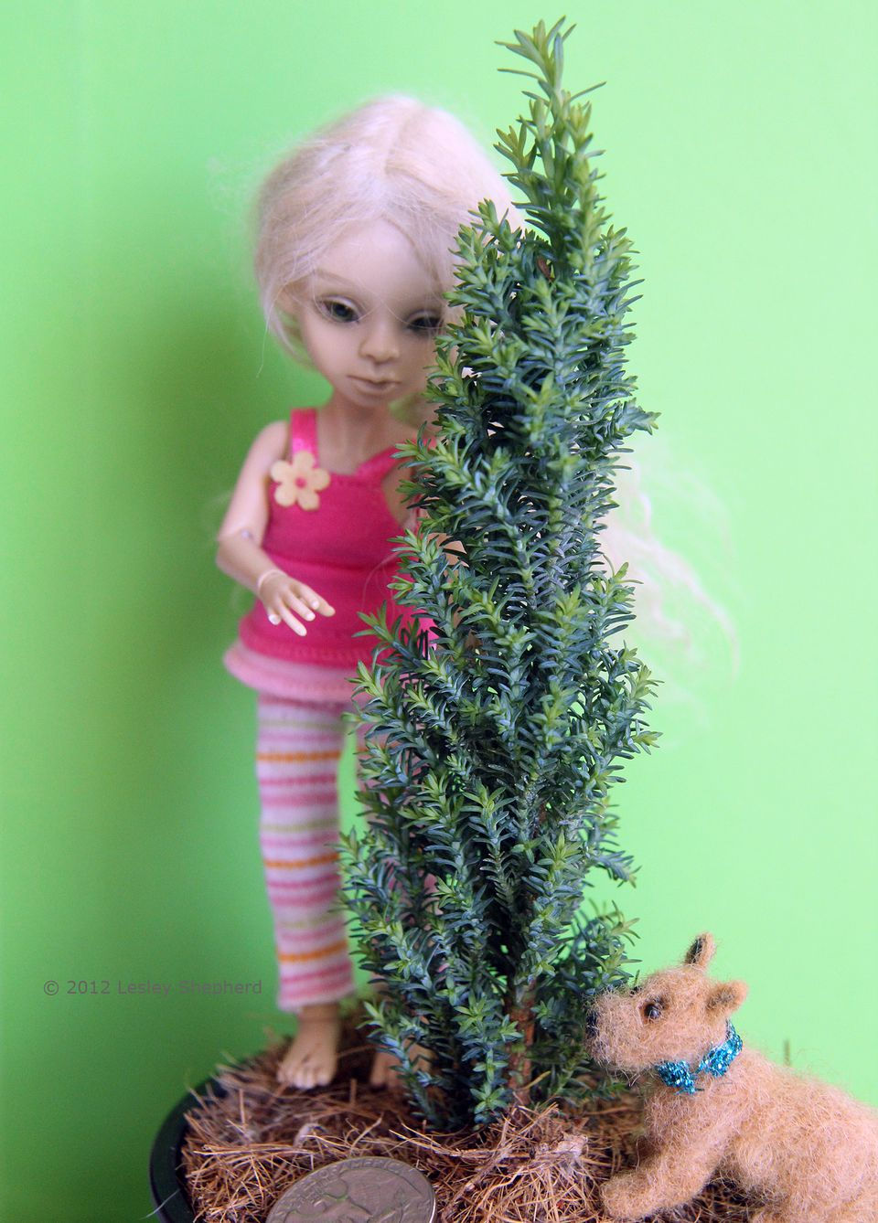 C.lawsoniana 'Ellwoods Pillar' With a 1:12 Scale Ball Jointed Doll For Scale