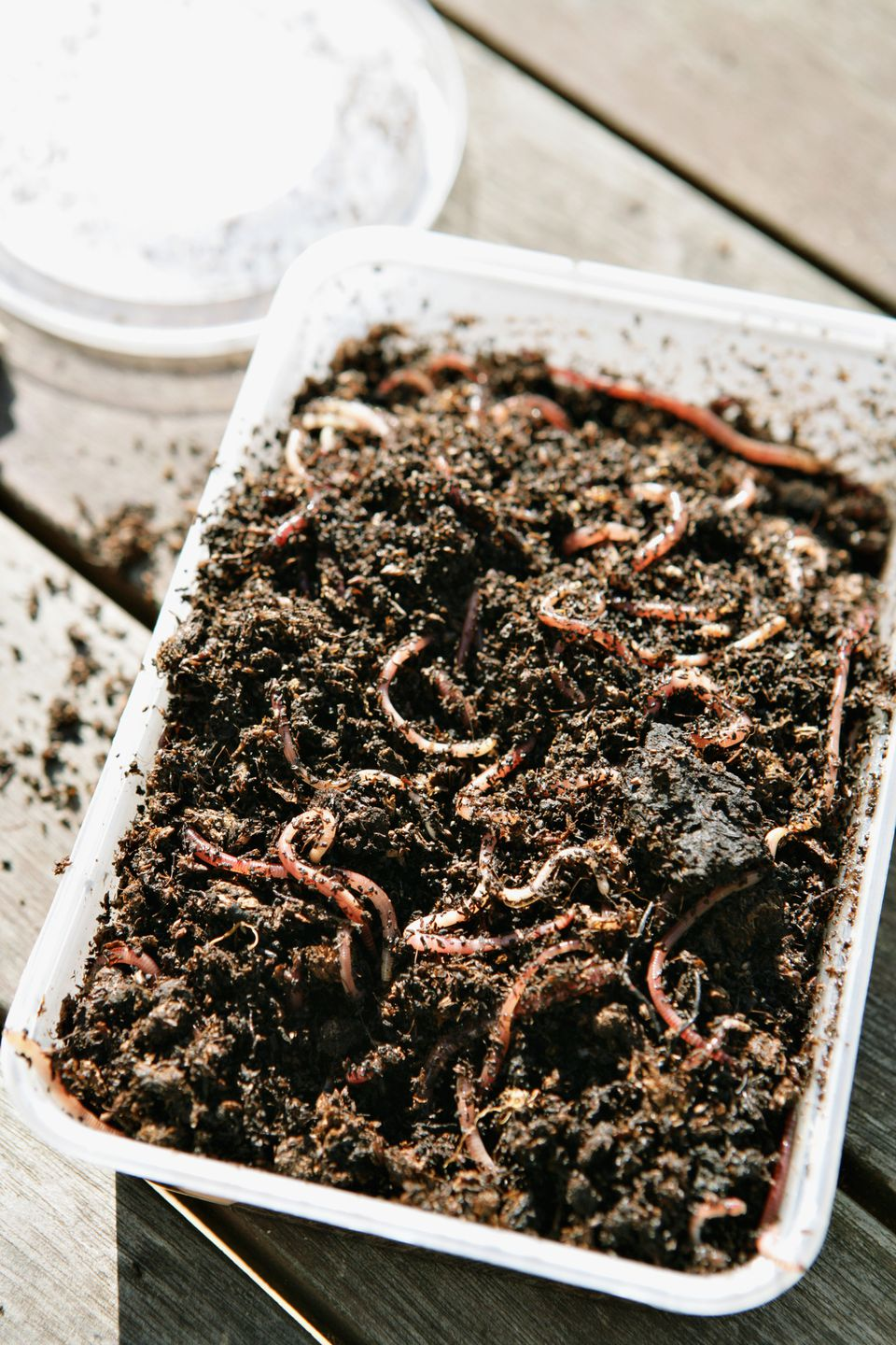 Vermicomposting- worms