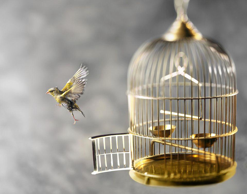 Bird escapes from bird cage