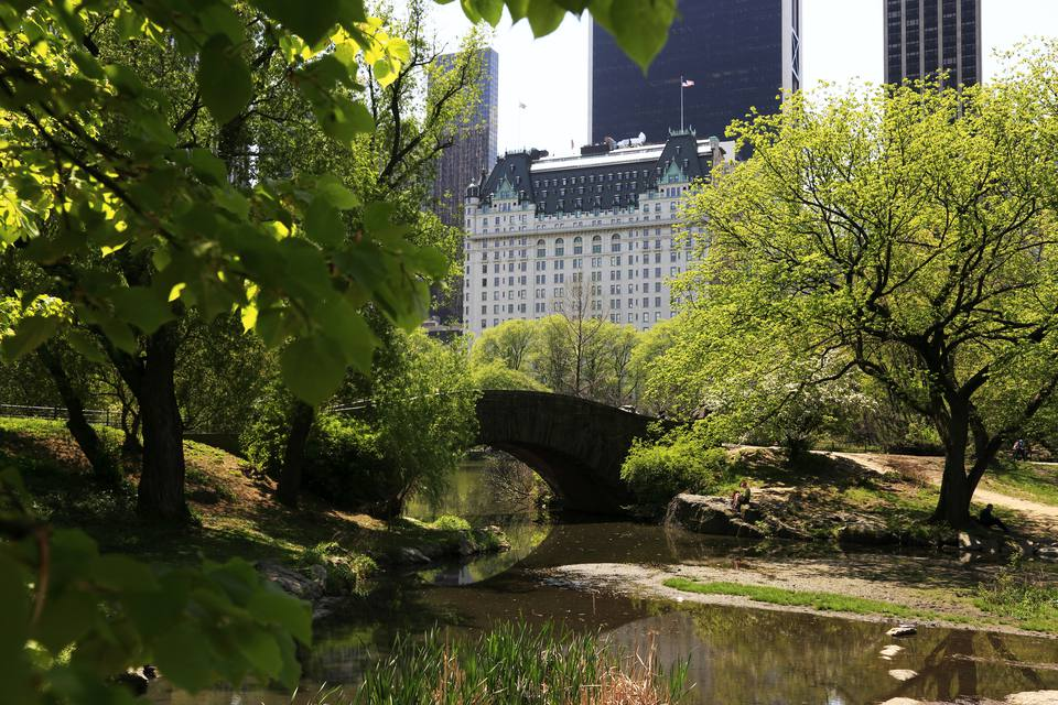 View of Plaza Hotel from Central Park