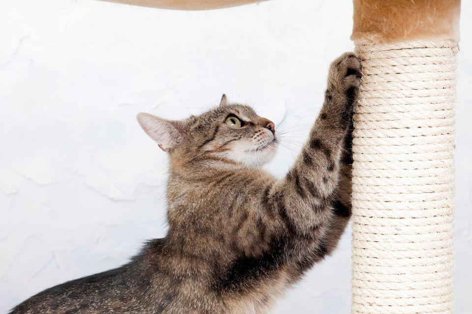 166275765Getty-Westend61-CatScratchingPost.jpg