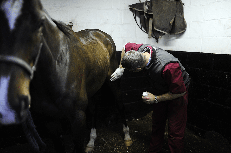 A vet checks a problem with a horses stifle.