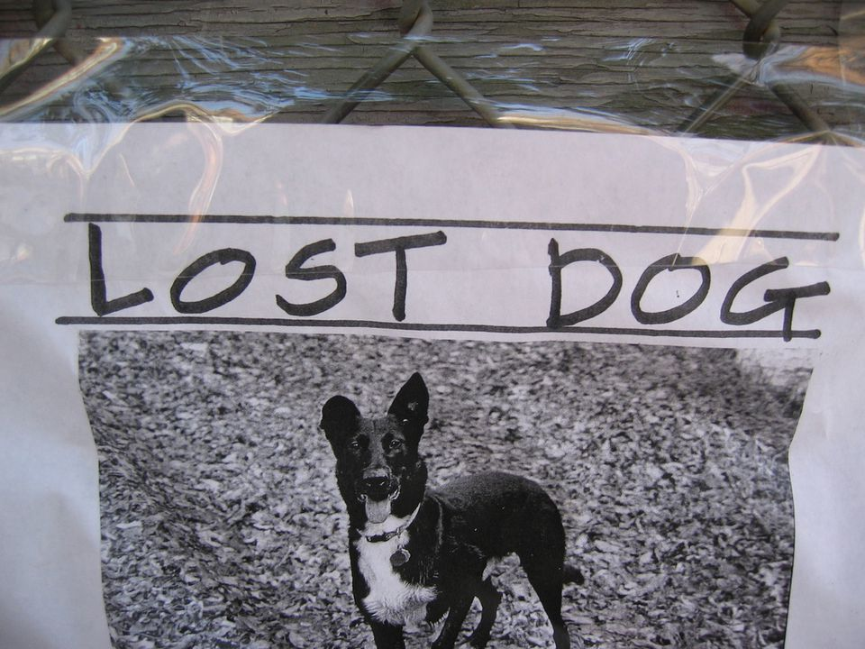 Lost Dogs in Charlotte
