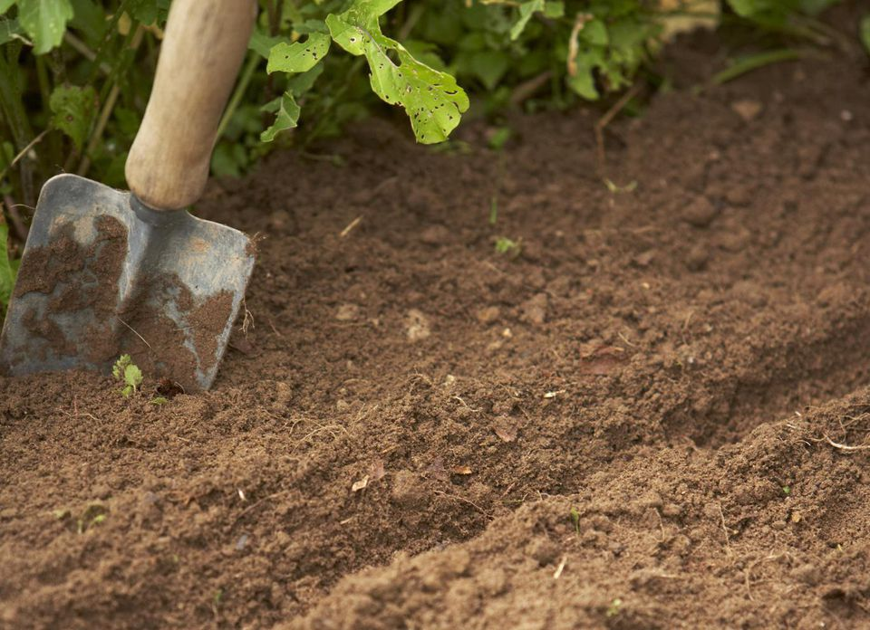 Furrows in vegetable patch