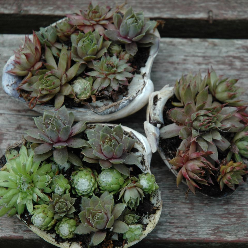 Container gardening picture of miniature container gardens