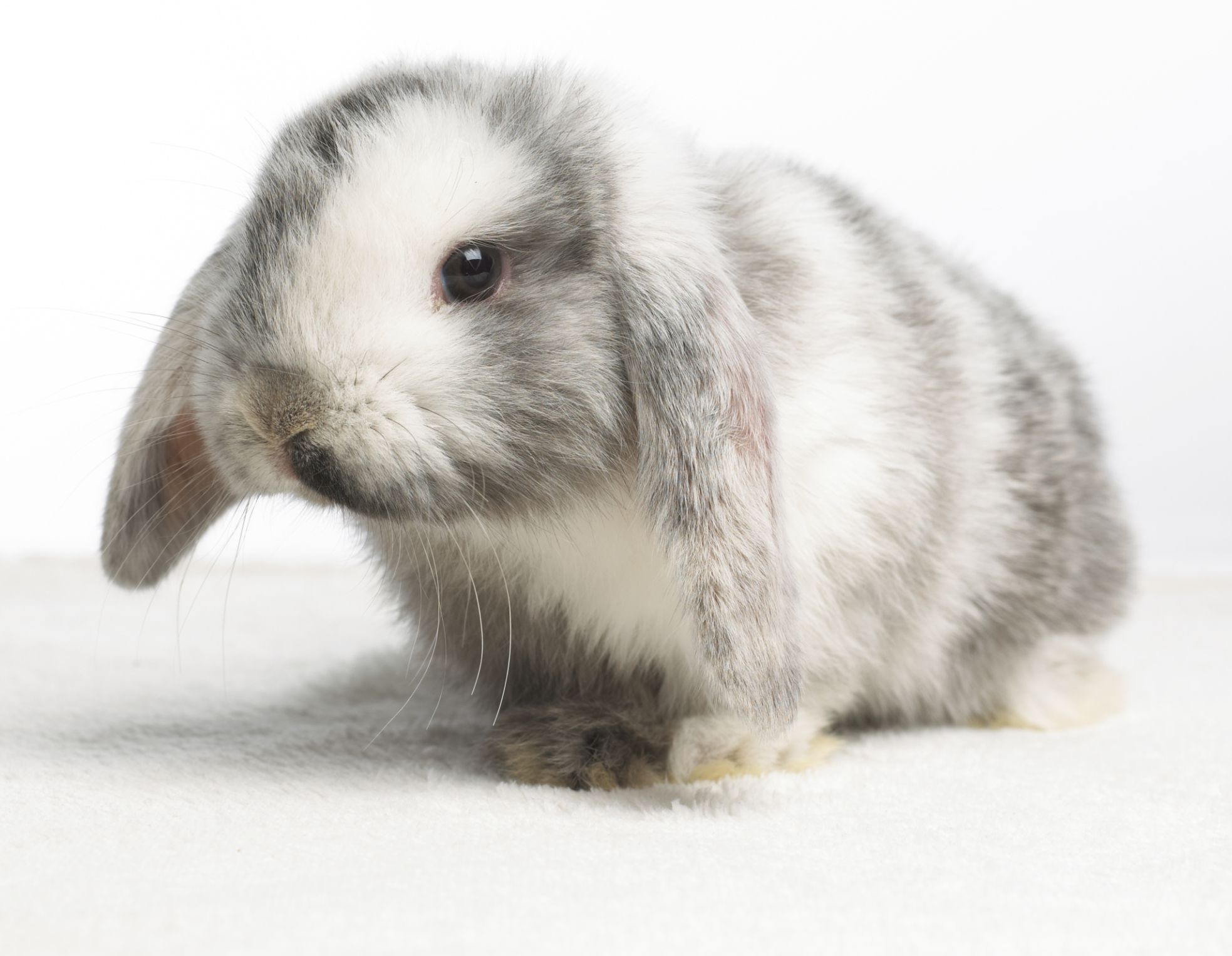Names for Pet Rabbits That Start With A
