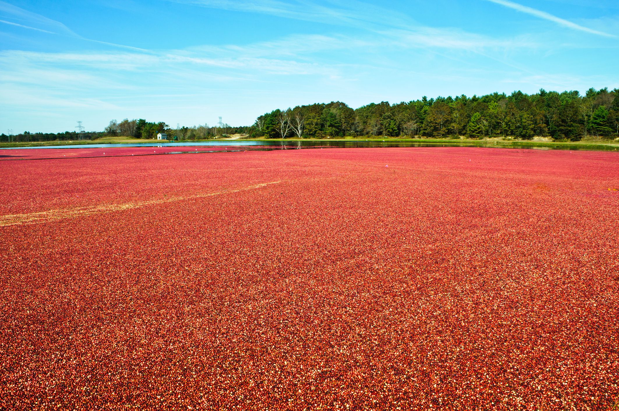 These Are The 6 Best Cranberry Bogs To Visit In Massachusetts