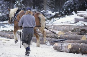 Horse logging, Bulkley Valley, British Columbia, Canada.