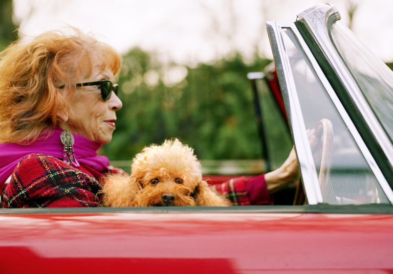 senior woman driving convertible with poodle
