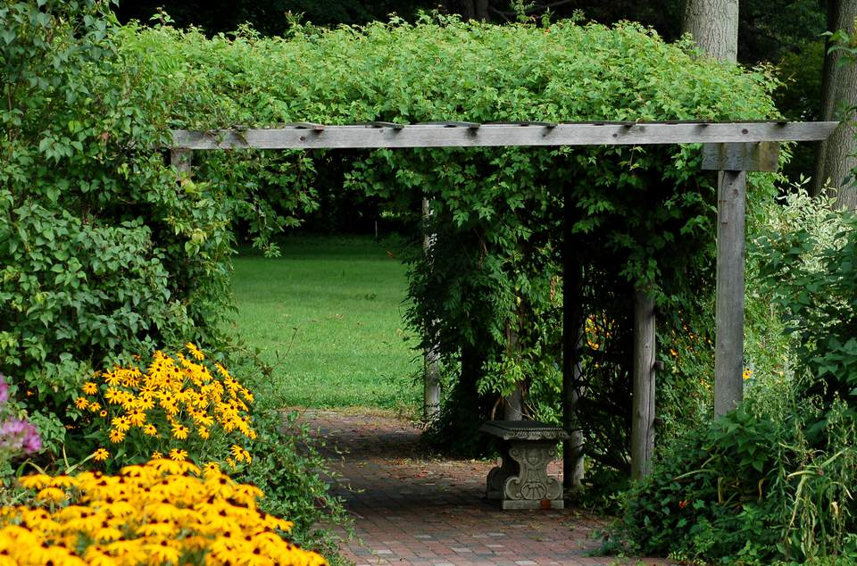 Image of vine-covered pergola.