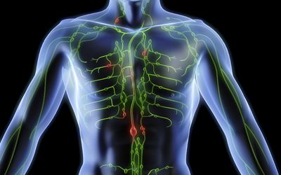 the esophagus and its function