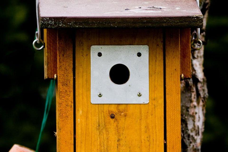 Bird House With Entrance Hole Plate
