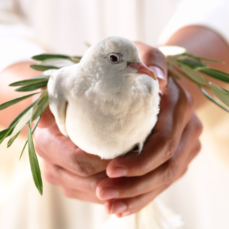 forgiveness forgive dove olive branch