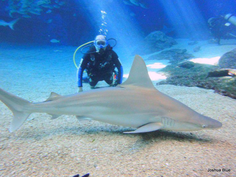 Maui Ocean Center Shark Dive