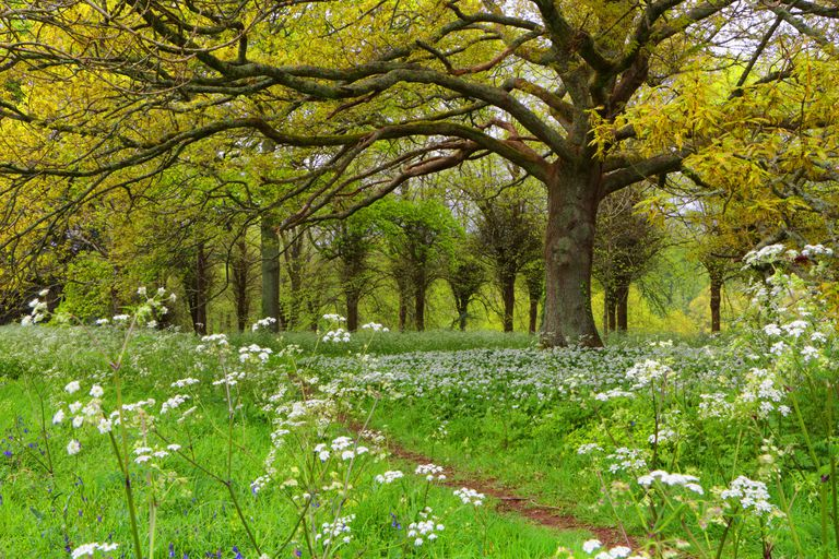 Trees that can trigger spring allergy symptoms.