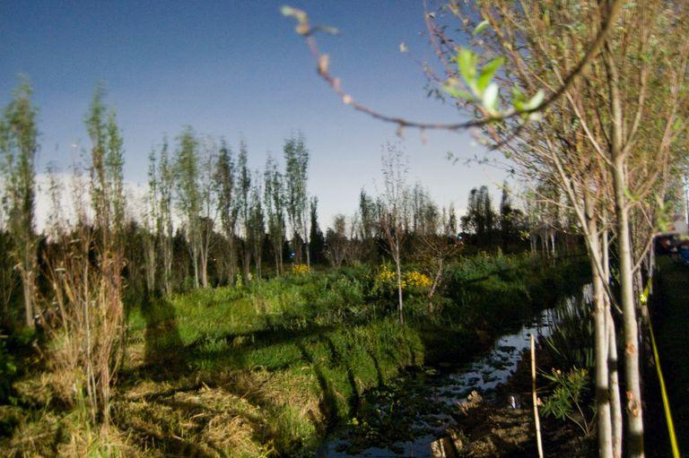 Chinampa Field Scene, Xochimilco
