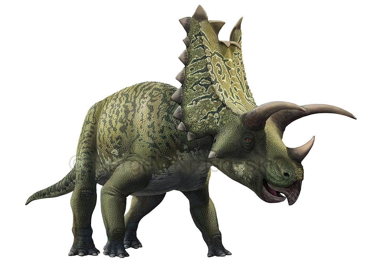 10 famous horned dinosaurs that werent triceratops