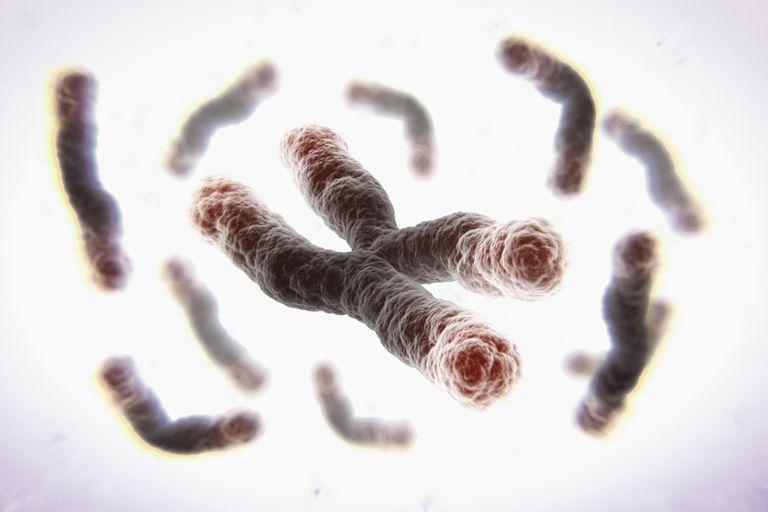 Telomeres