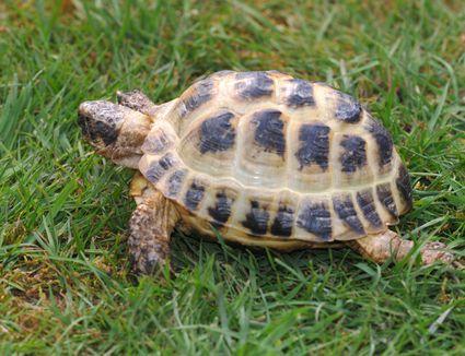 Red Foot Tortoise Habitat