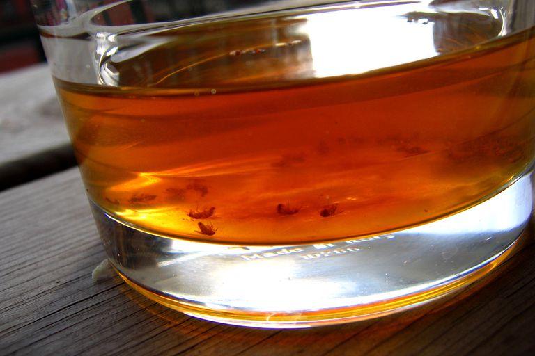 Fruit Fly Vinegar Trap