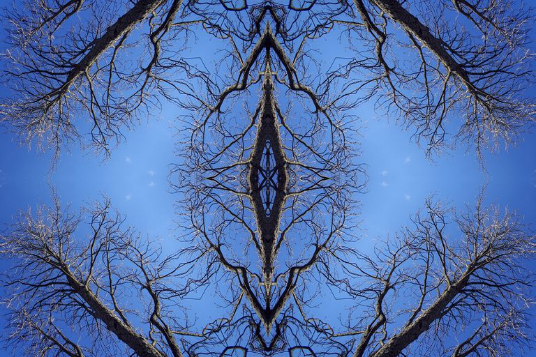 Abstract image: kaleidoscopic image of bare tree branches against the sky.