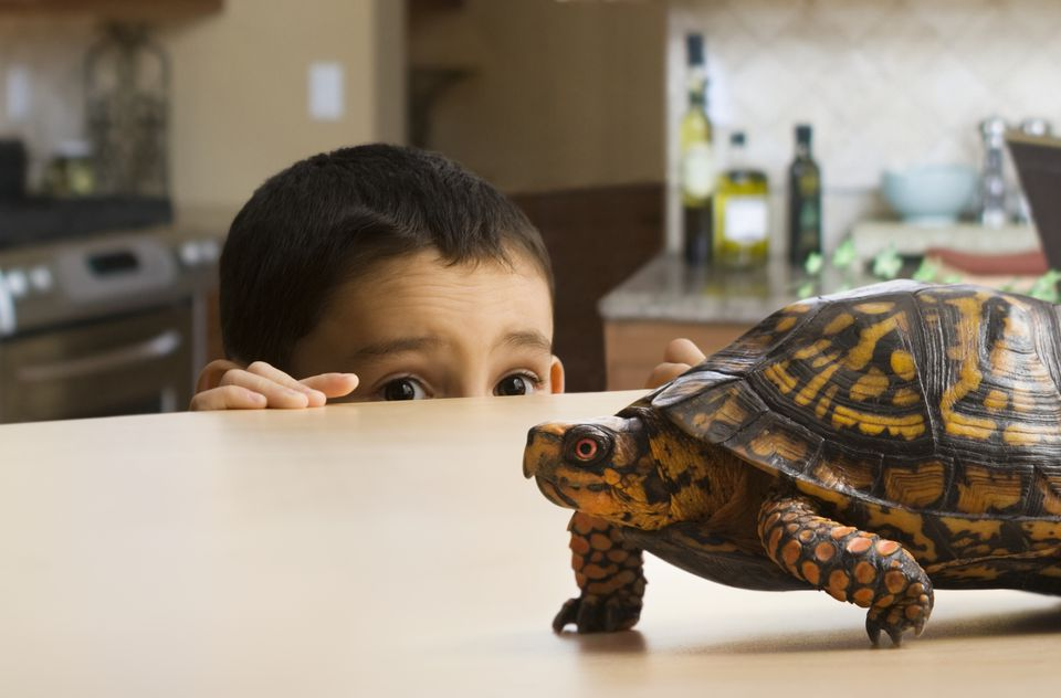 Boy and a Turtle