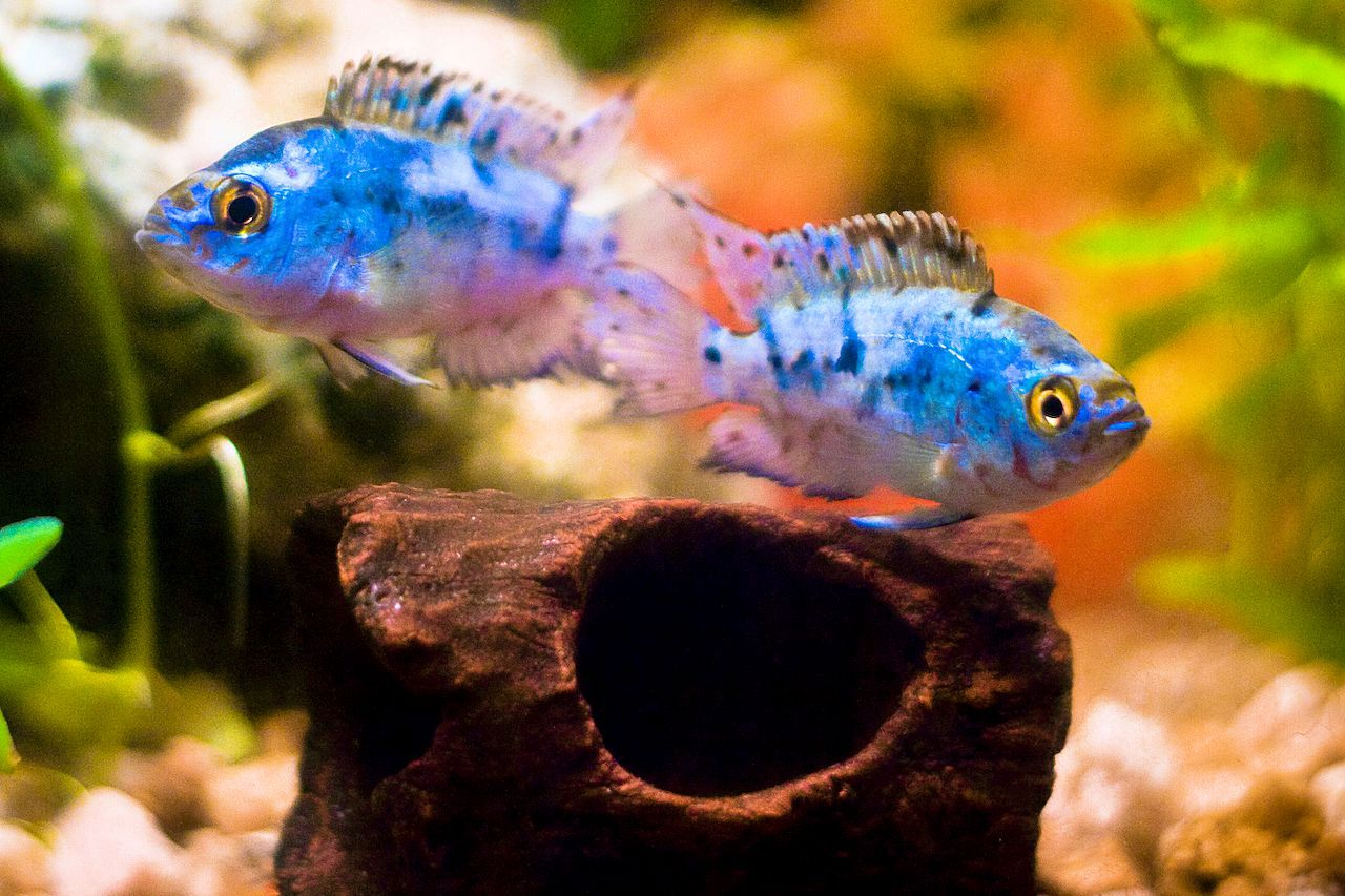 how to care for freshwater fish