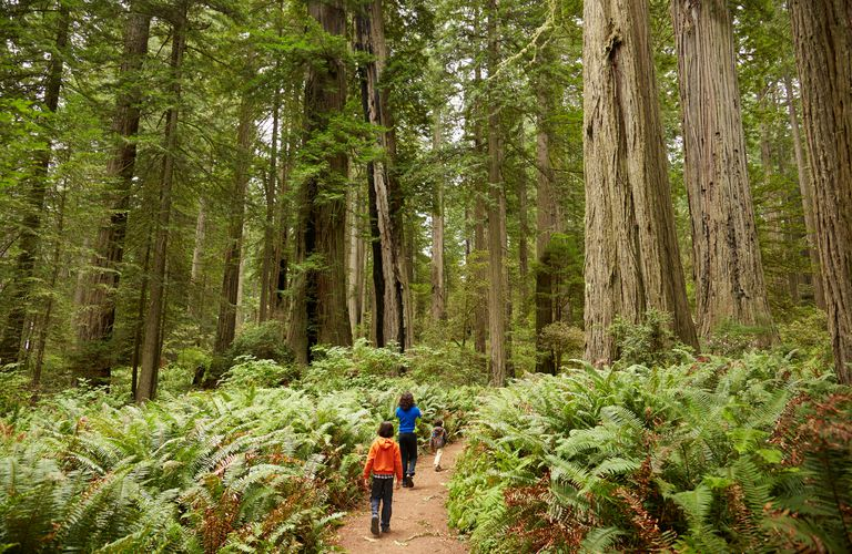 Kids hiking on a forest trail