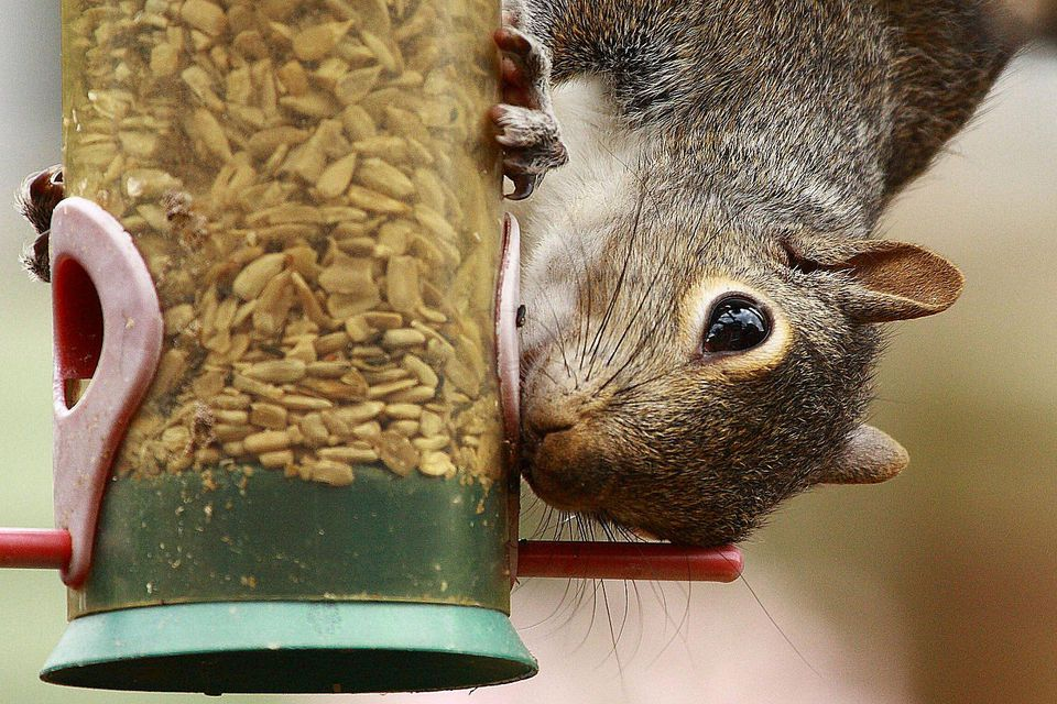 your feeder off keep articles bird yard squirrels