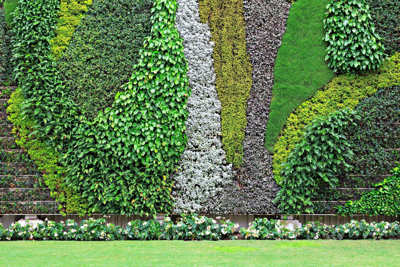 vertical garden history the best plants for walls. Black Bedroom Furniture Sets. Home Design Ideas