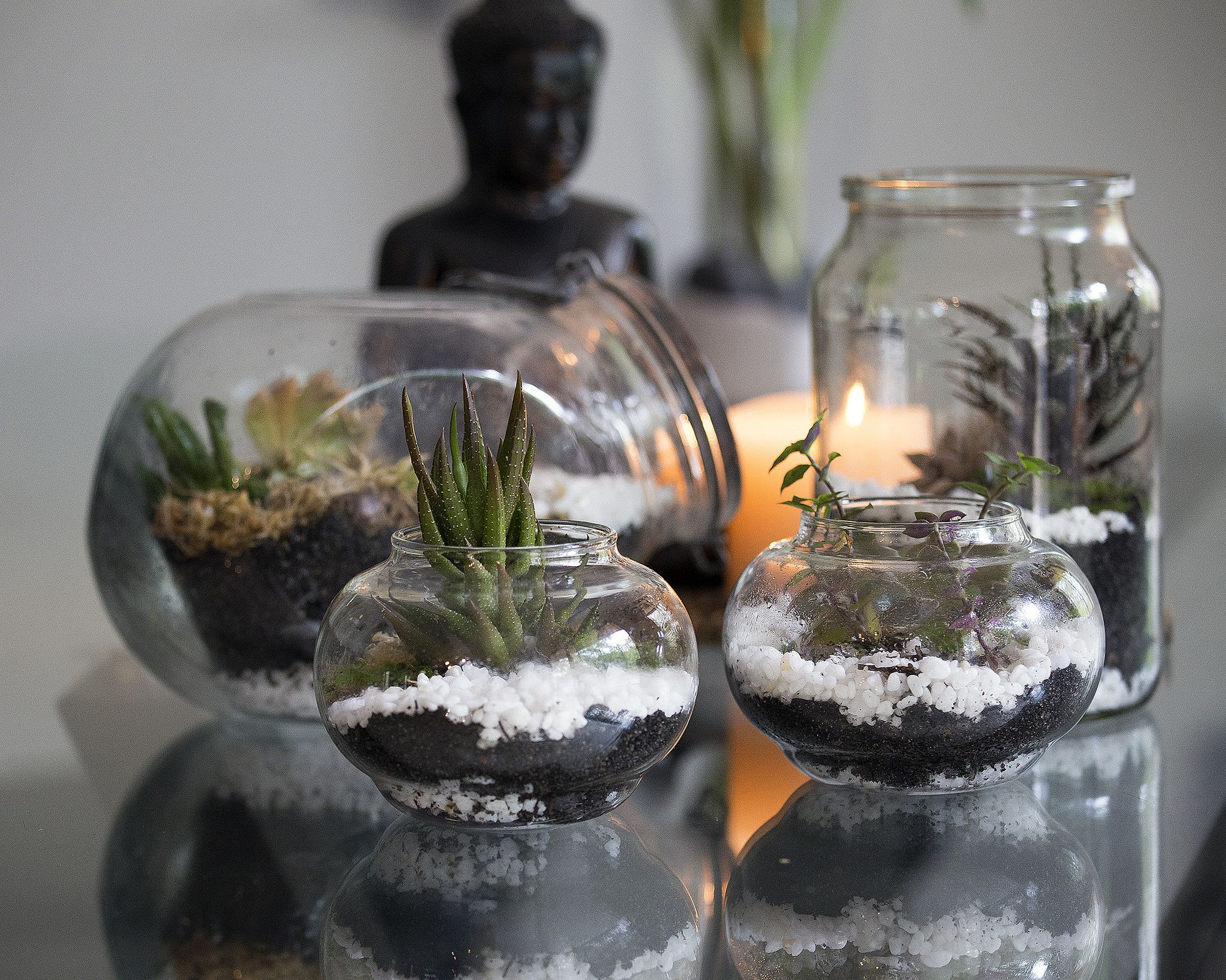 mon Terrarium Mistakes and How to Avoid Them