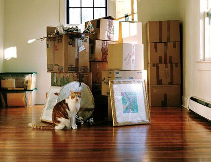 How To Settle A Cat After Moving House