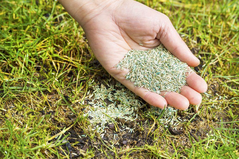 seeding bare spot in lawn
