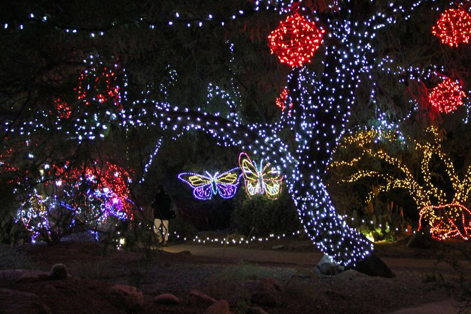 Zoo lights phoenix az coupons