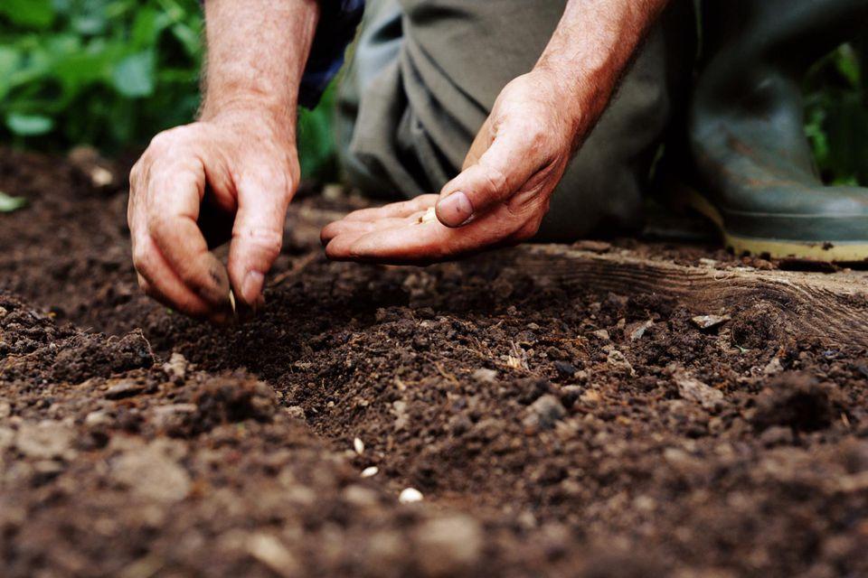 Mature man planting seeds, close-up