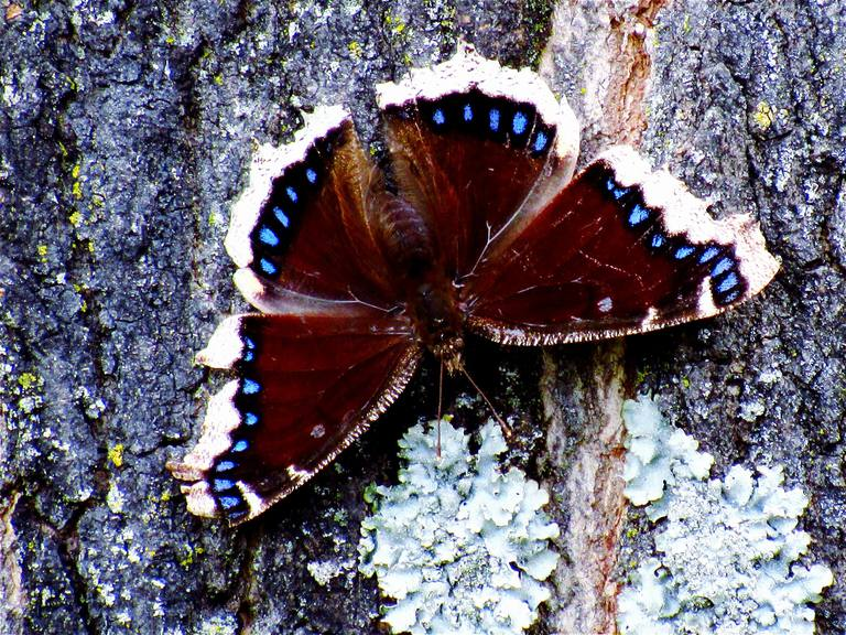 Butterfly feeding on tree sap.