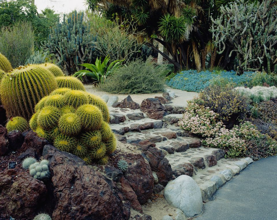 desert garden