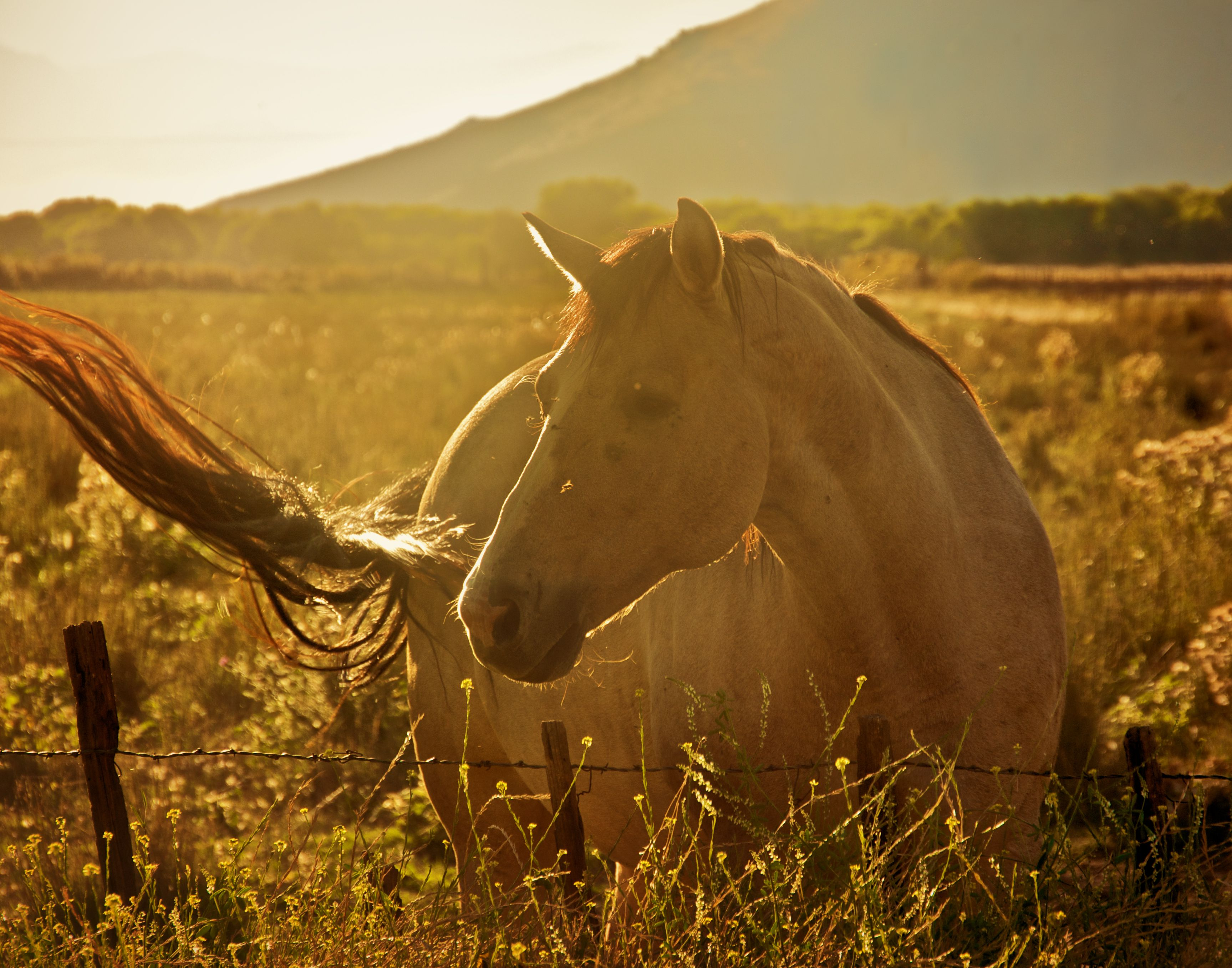 an introduction to the equine protozoal myeloencephalitis epm Equine protozoal myeloencephalitis (epm) is a progressive neurological disease   intragastric introduction was the first method used to create an epm model.