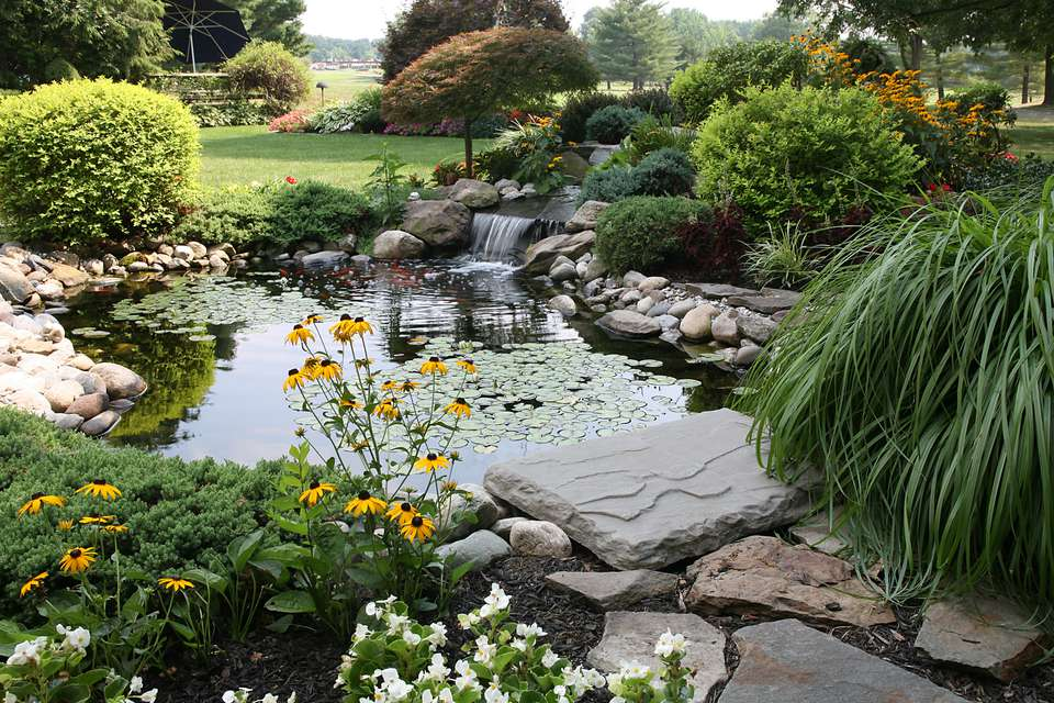 9 great plants for small backyard ponds for Small pond house plans