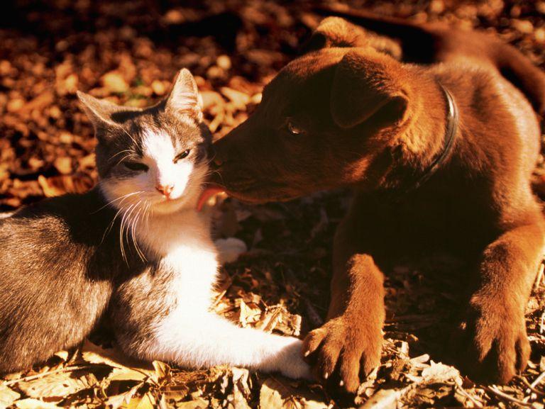 The Magic Symbolism Of Animals