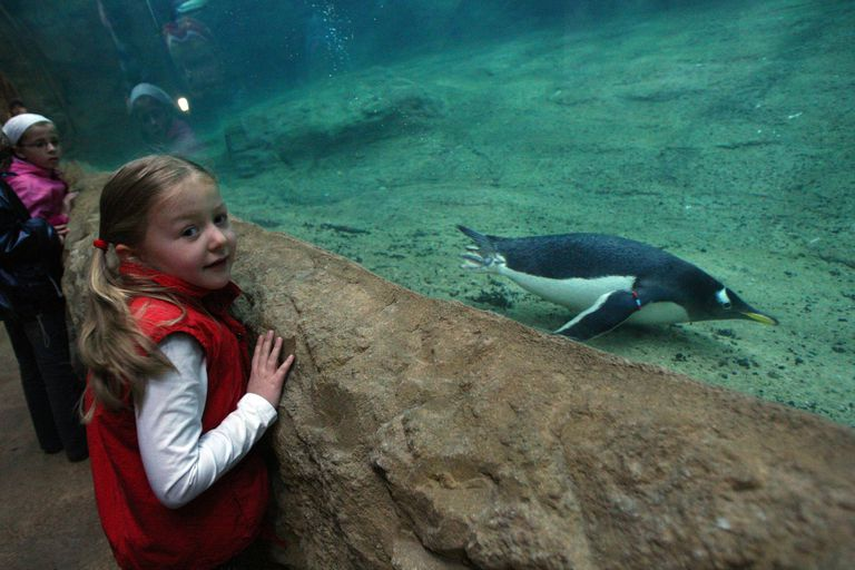 Penguin at the Zoo